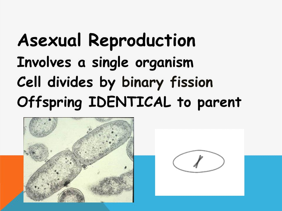 Asexual Reproduction Involves a single organism