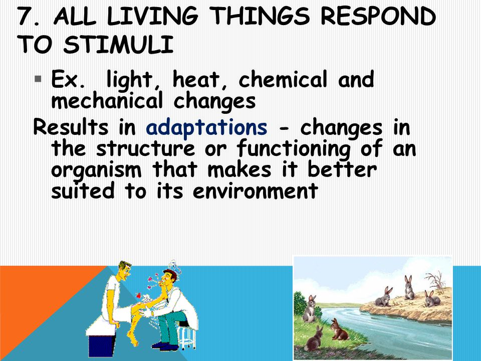 7. All living things respond to stimuli