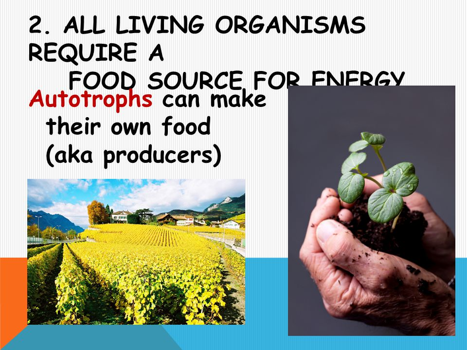 2. All living organisms require a food source for energy.