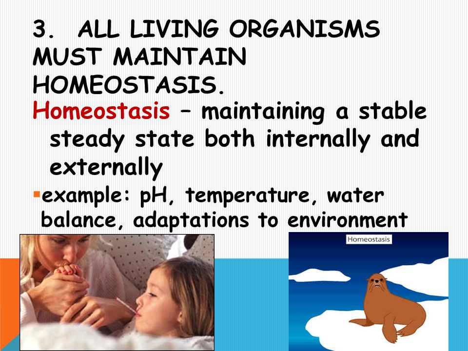 3. All living organisms must maintain homeostasis.