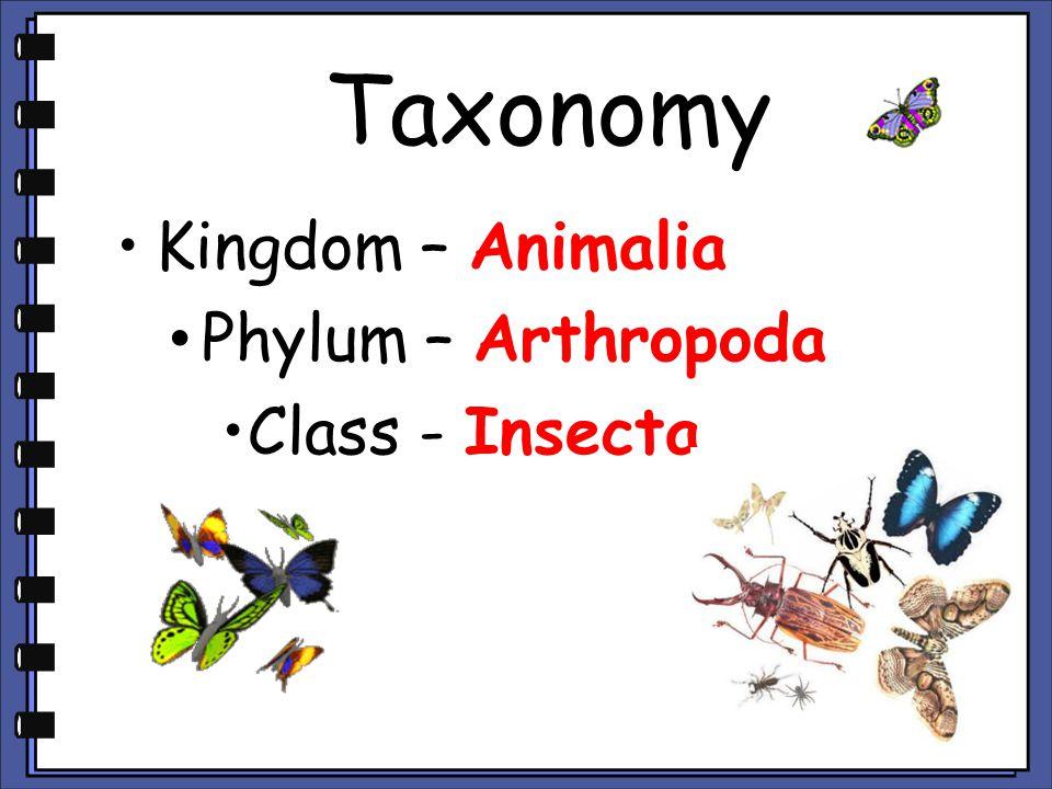 Taxonomy Kingdom – Animalia Phylum – Arthropoda Class - Insecta