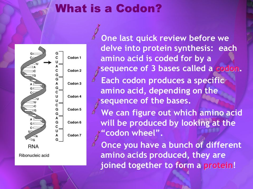What is a Codon One last quick review before we delve into protein synthesis: each amino acid is coded for by a sequence of 3 bases called a codon.