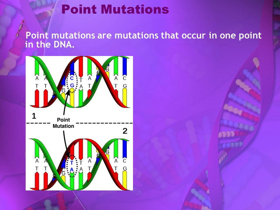 Point Mutations Point mutations are mutations that occur in one point in the DNA.