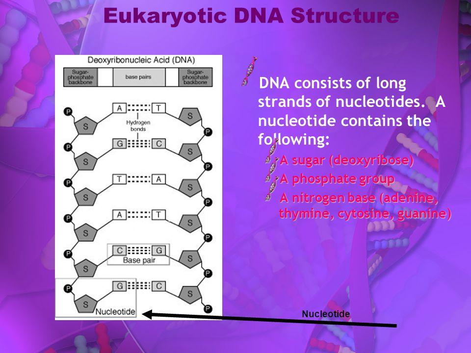 Eukaryotic DNA Structure