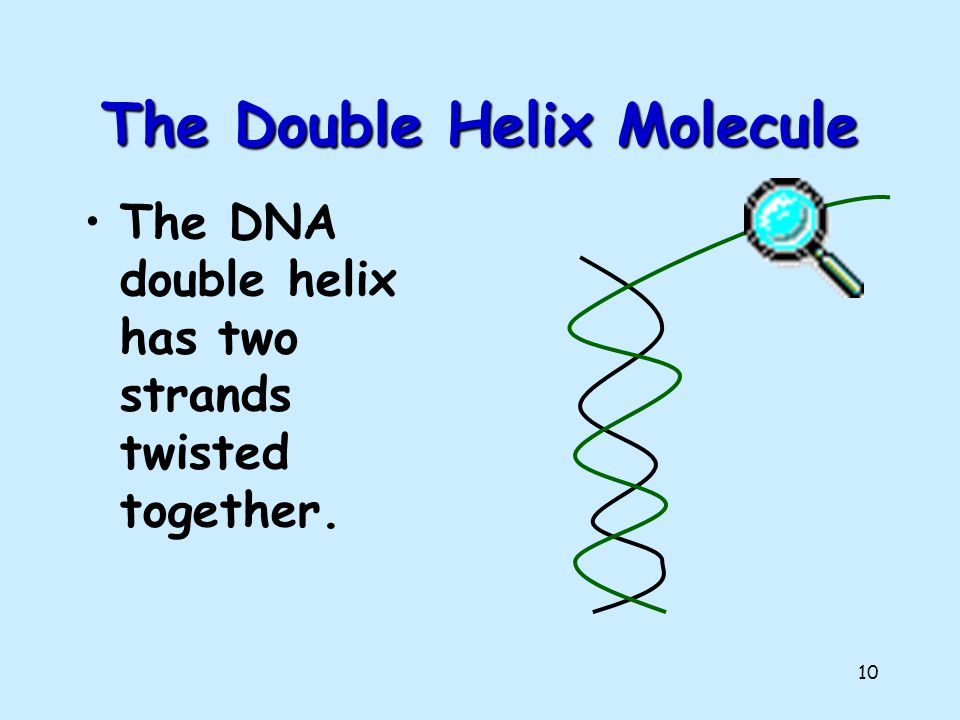 The Double Helix Molecule