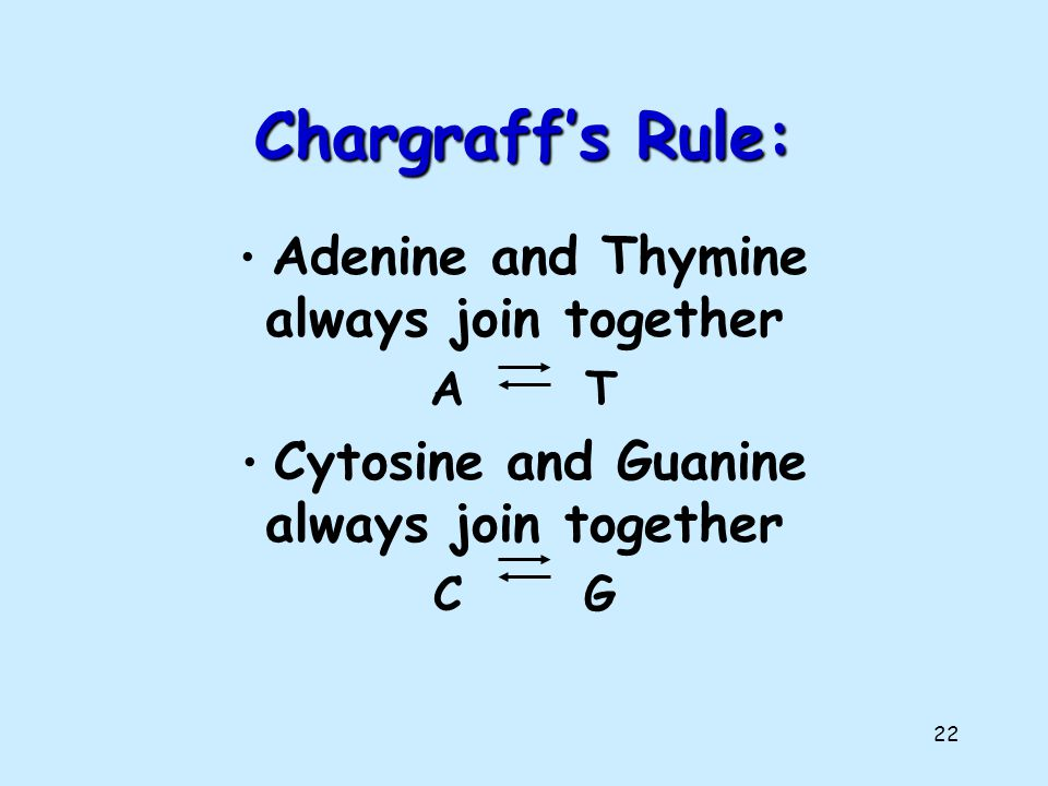 Chargraff's Rule: Adenine and Thymine always join together A T