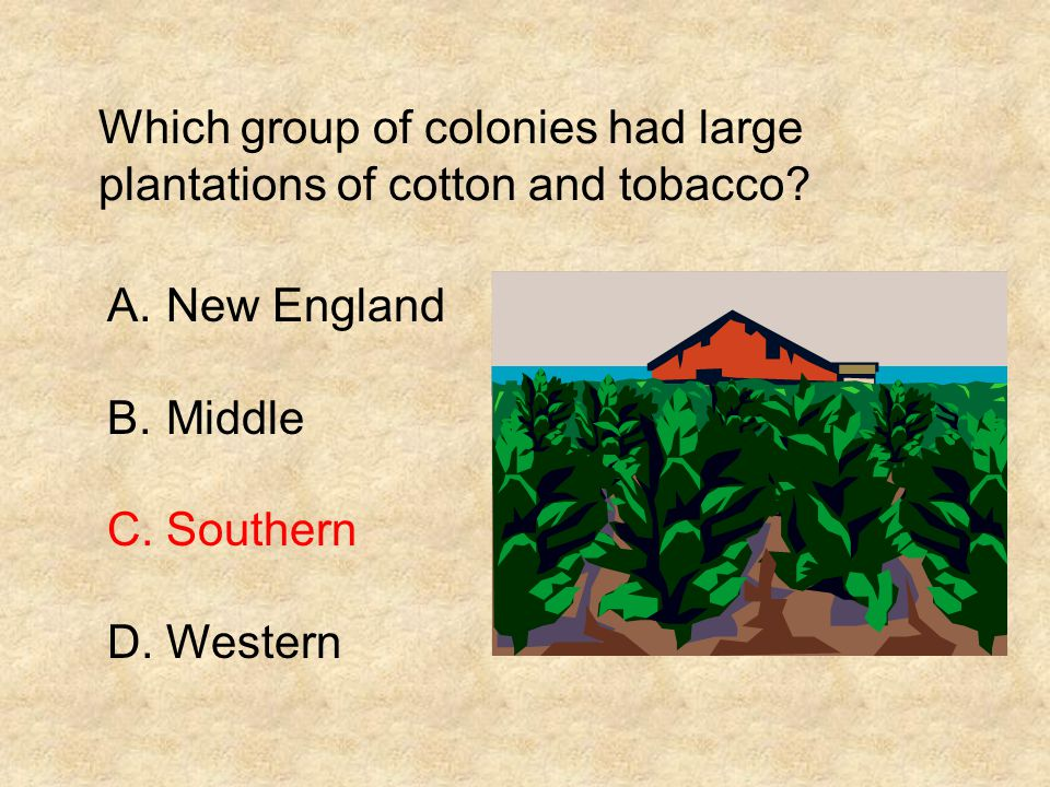 Which group of colonies had large plantations of cotton and tobacco