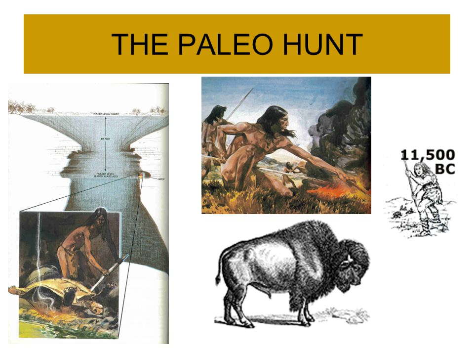 THE PALEO HUNT