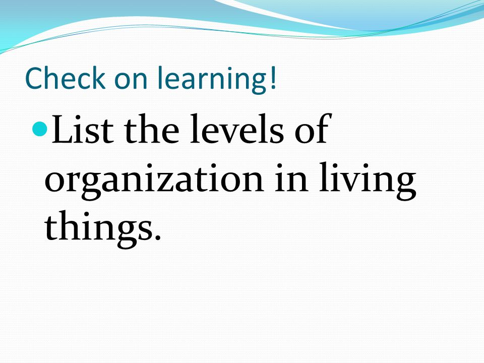List the levels of organization in living things.
