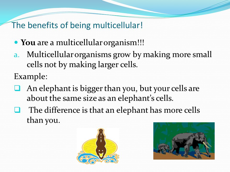 The benefits of being multicellular!
