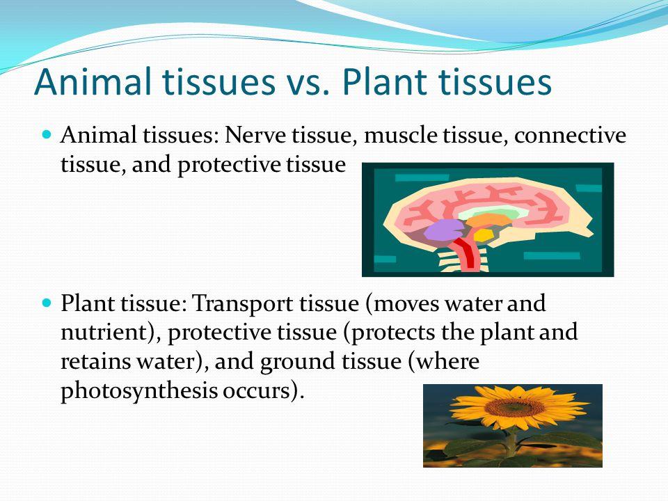 Animal tissues vs. Plant tissues