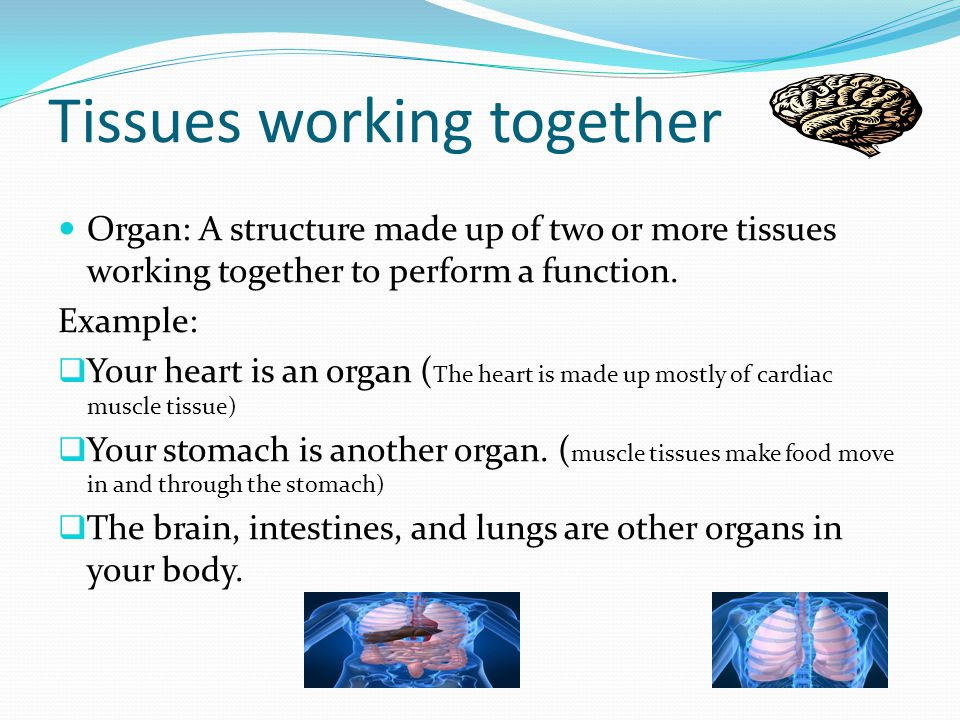 Tissues working together