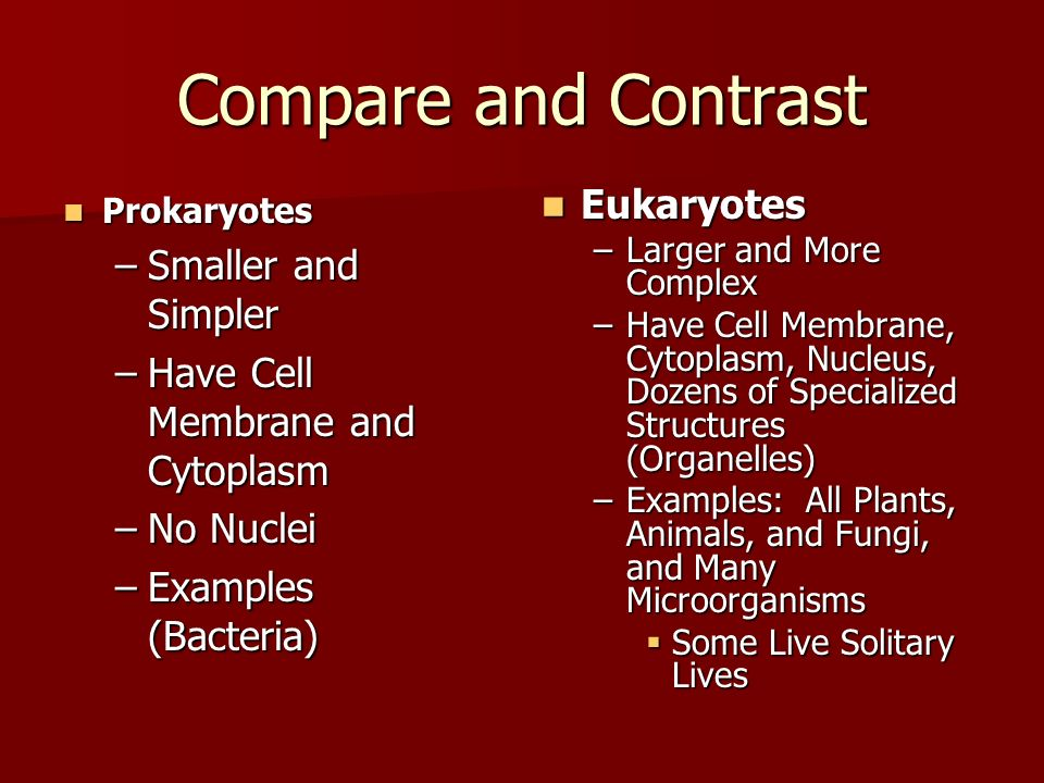 Compare and Contrast Eukaryotes Smaller and Simpler