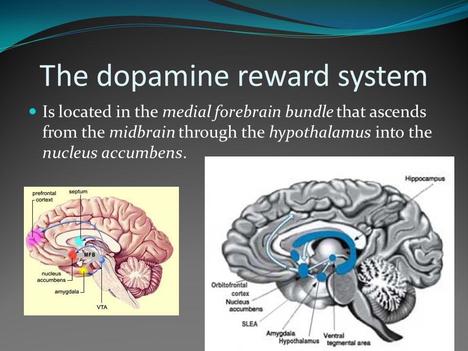 The dopamine reward system