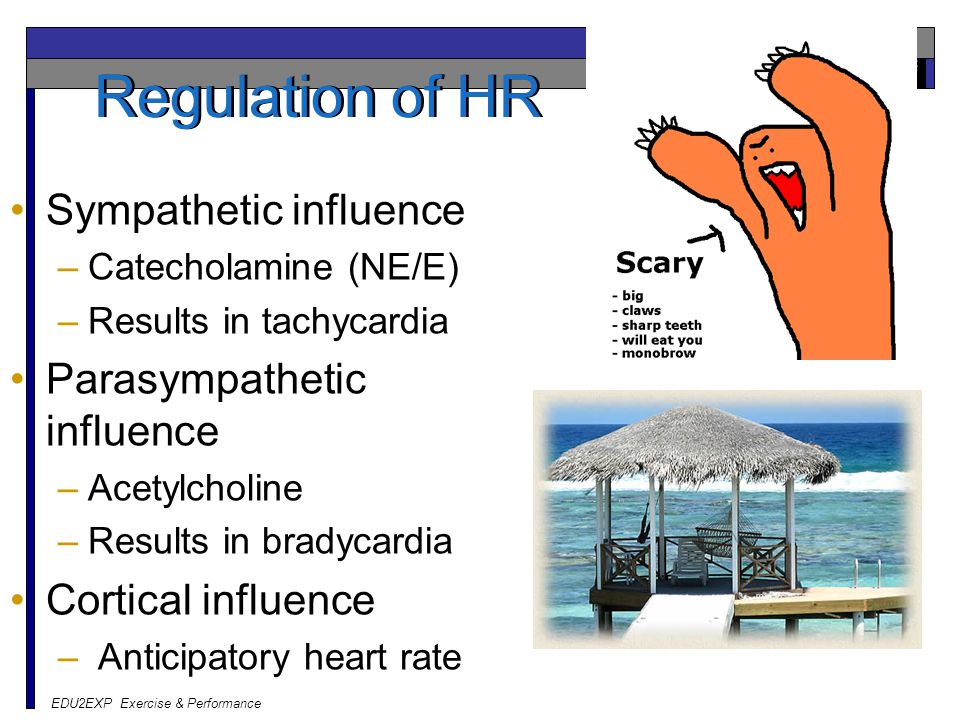 Regulation of HR Sympathetic influence Parasympathetic influence