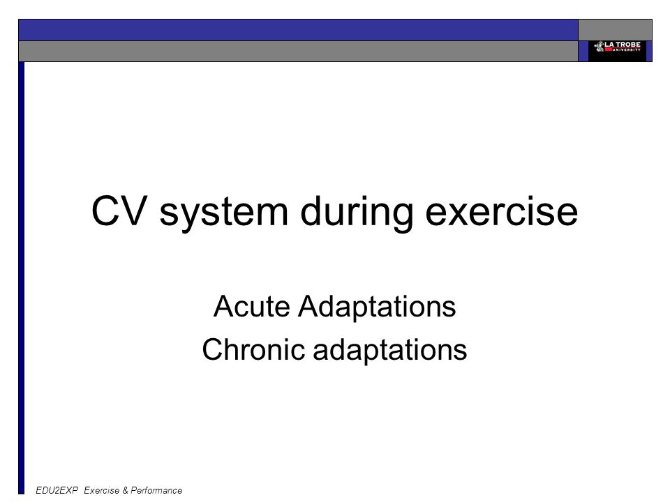CV system during exercise