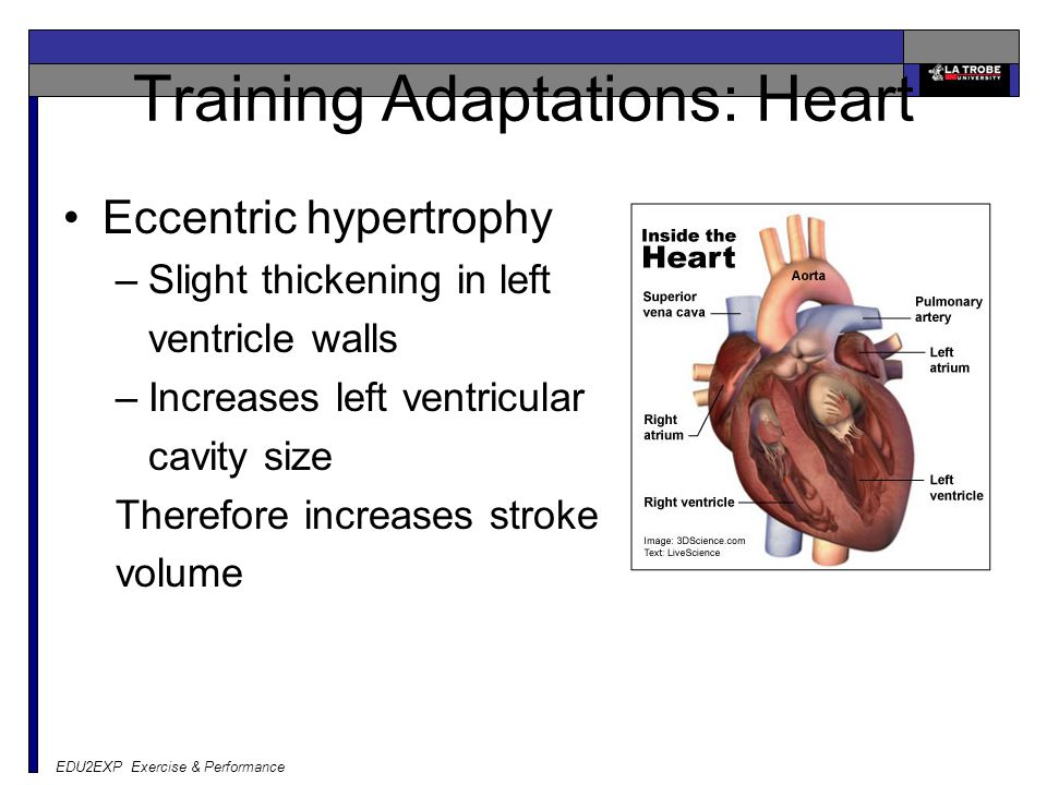 Training Adaptations: Heart