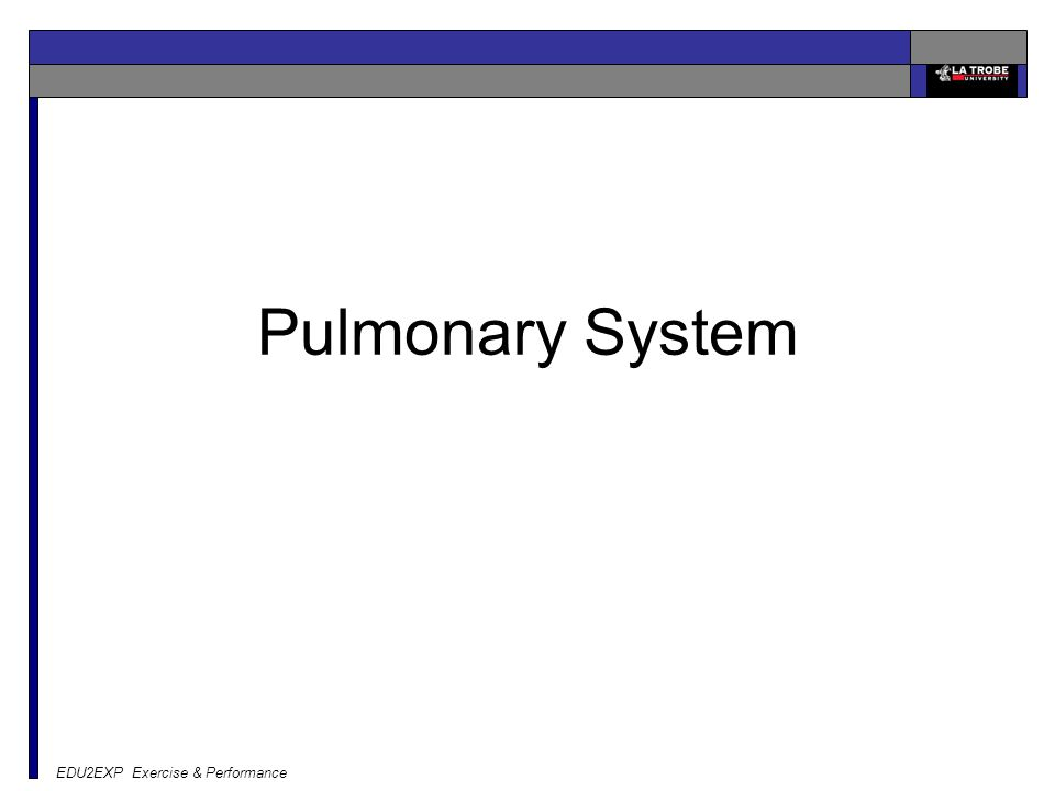 Pulmonary System EDU2EXP Exercise & Performance