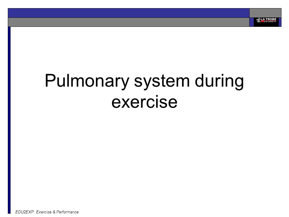 Pulmonary system during exercise