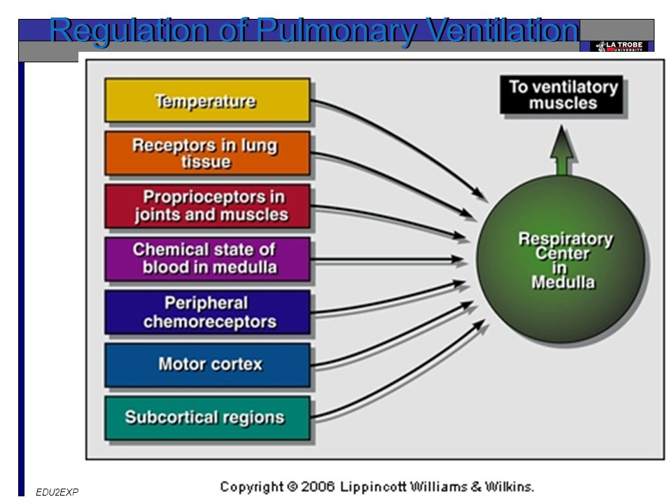 Regulation of Pulmonary Ventilation