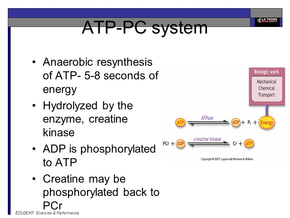 ATP-PC system Anaerobic resynthesis of ATP- 5-8 seconds of energy