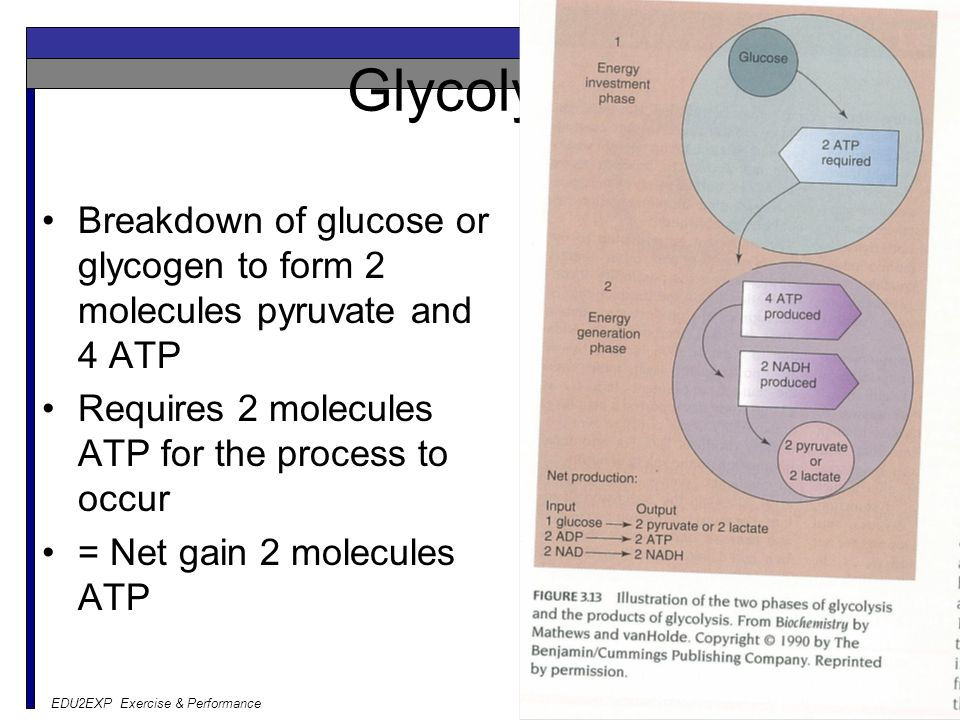 Glycolysis Breakdown of glucose or glycogen to form 2 molecules pyruvate and 4 ATP. Requires 2 molecules ATP for the process to occur.