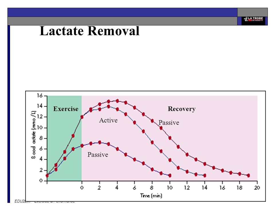 Lactate Removal Exercise Recovery Active Passive Passive