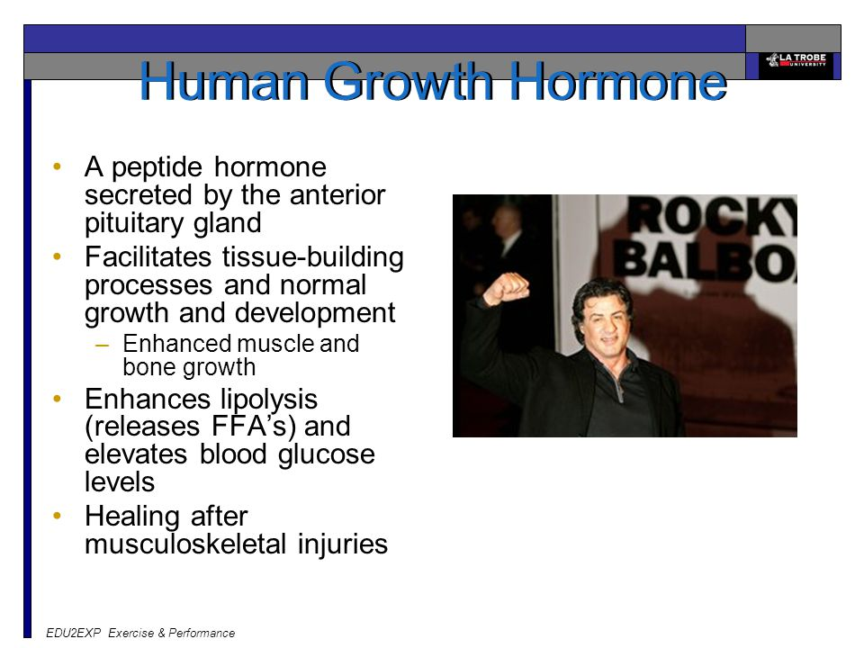 Human Growth Hormone A peptide hormone secreted by the anterior pituitary gland.