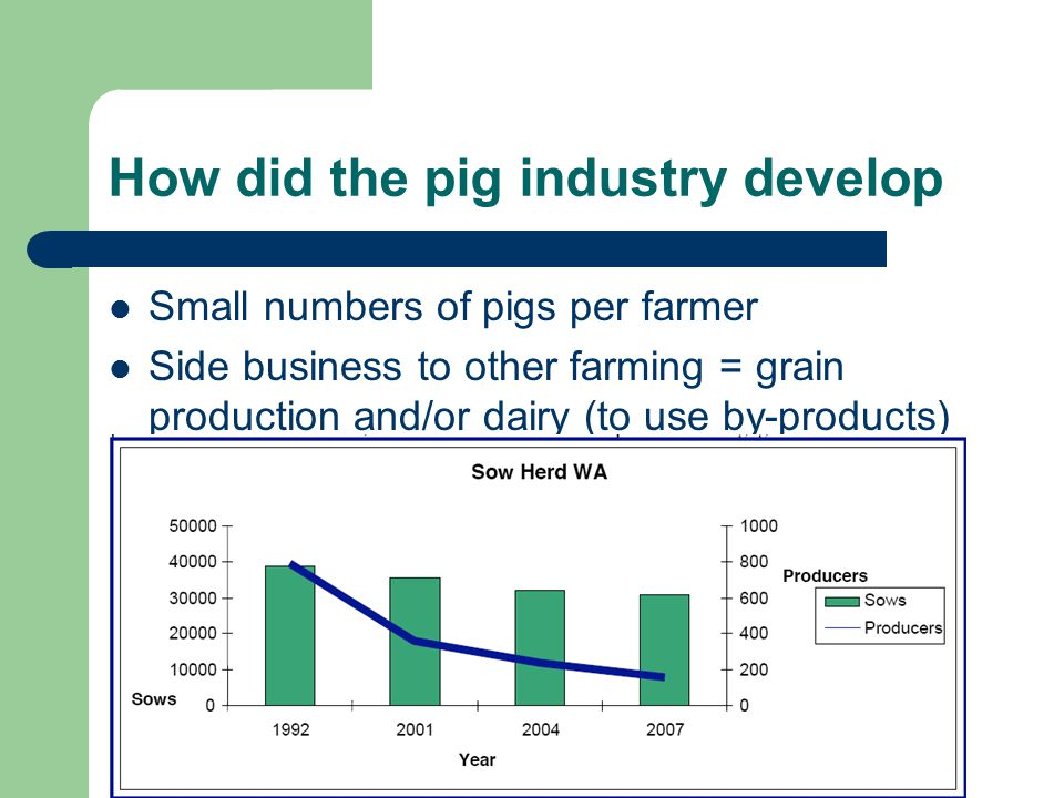 How did the pig industry develop