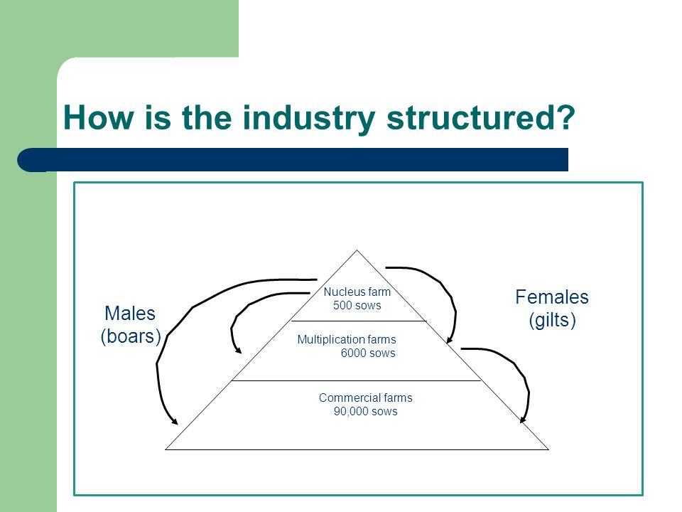 How is the industry structured