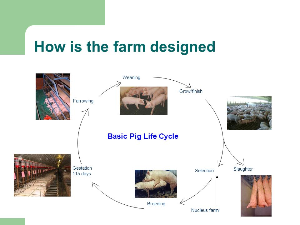 How is the farm designed