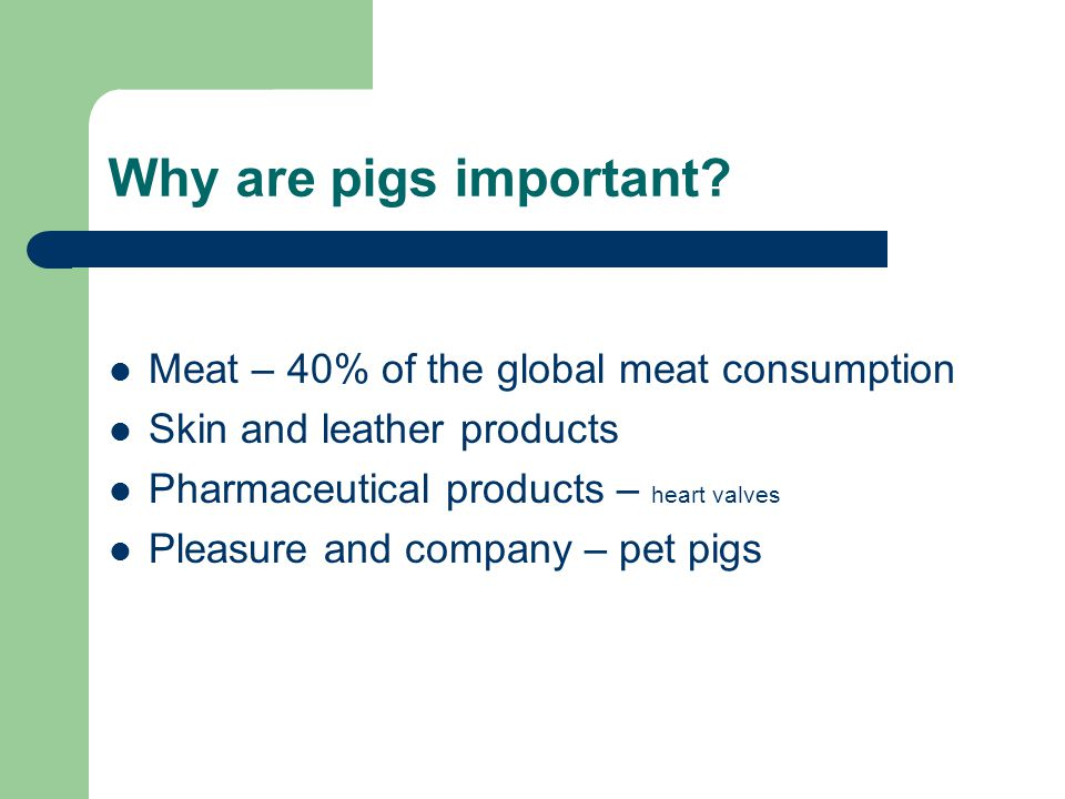 Why are pigs important Meat – 40% of the global meat consumption