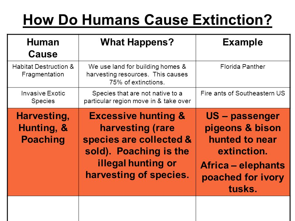 How Do Humans Cause Extinction