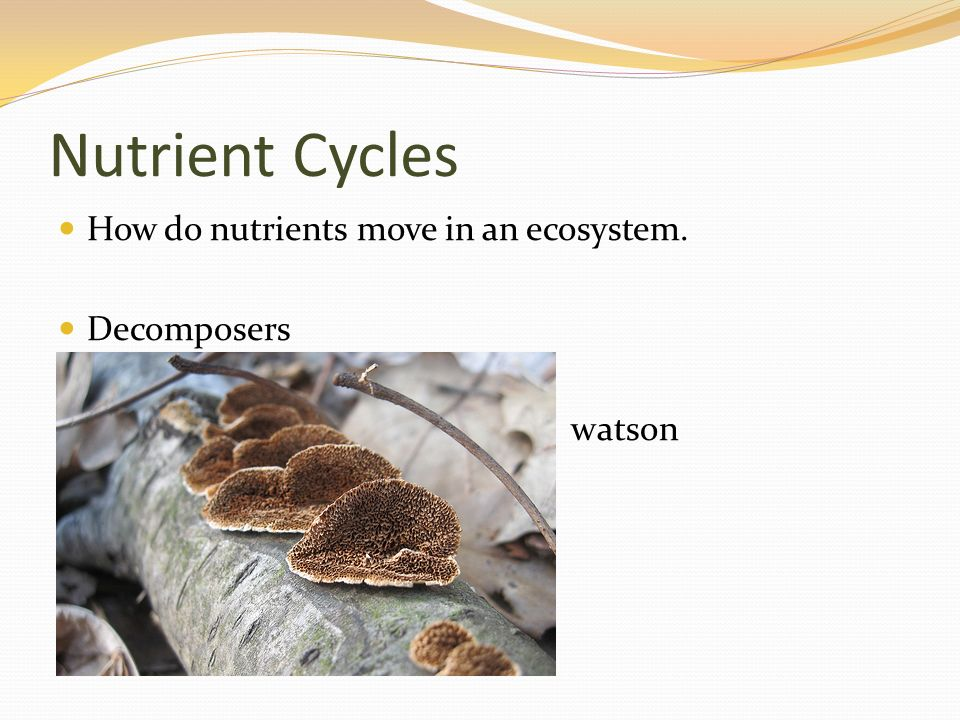 Nutrient Cycles How do nutrients move in an ecosystem. Decomposers