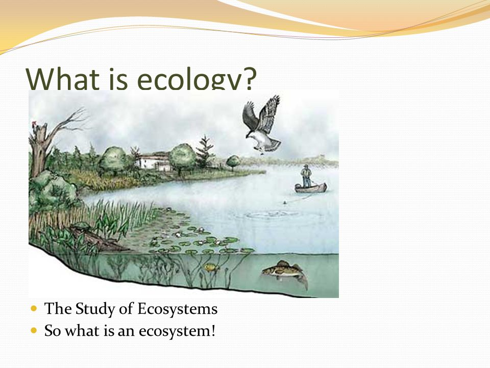What is ecology The Study of Ecosystems So what is an ecosystem!