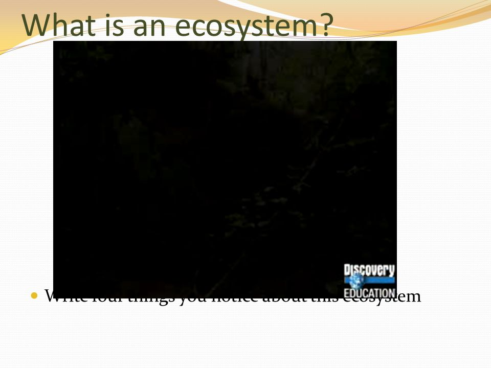What is an ecosystem Write four things you notice about this ecosystem