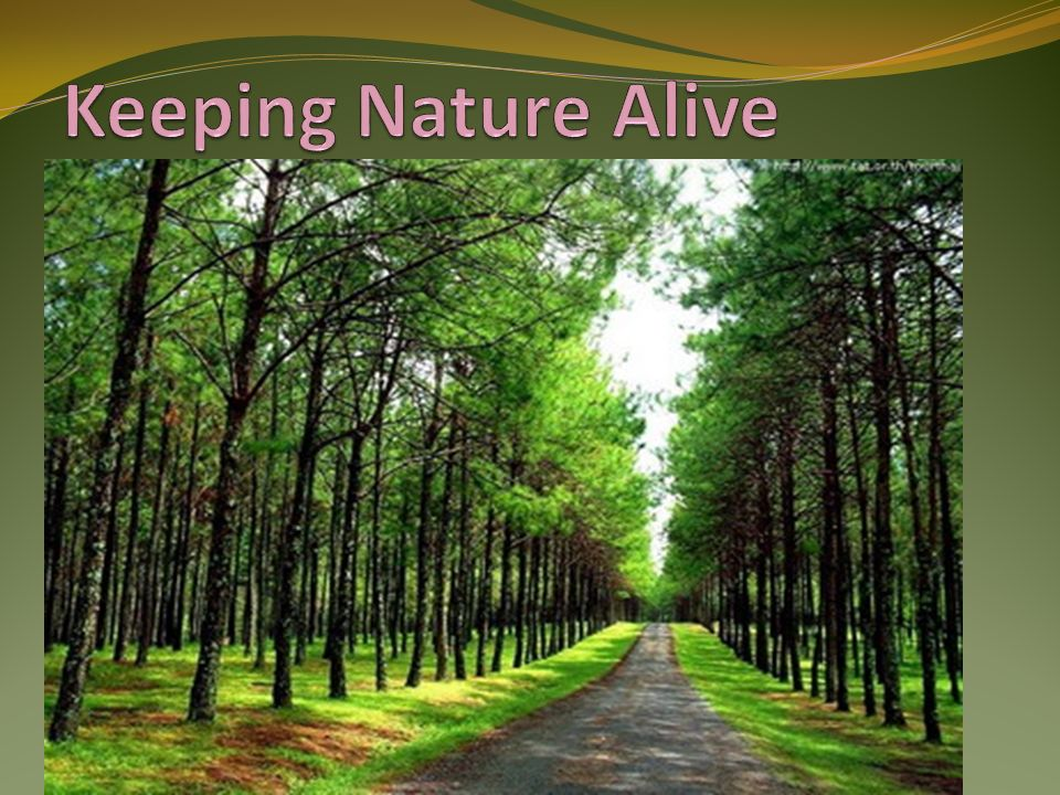 Keeping Nature Alive