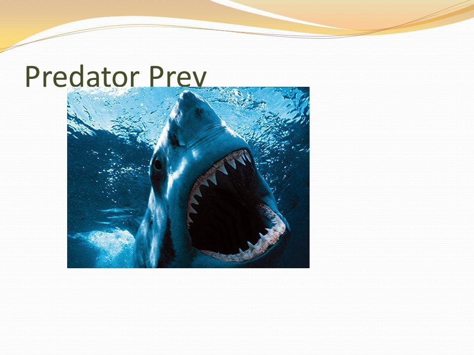 Predator Prey