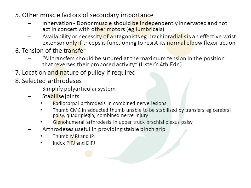 5. Other muscle factors of secondary importance