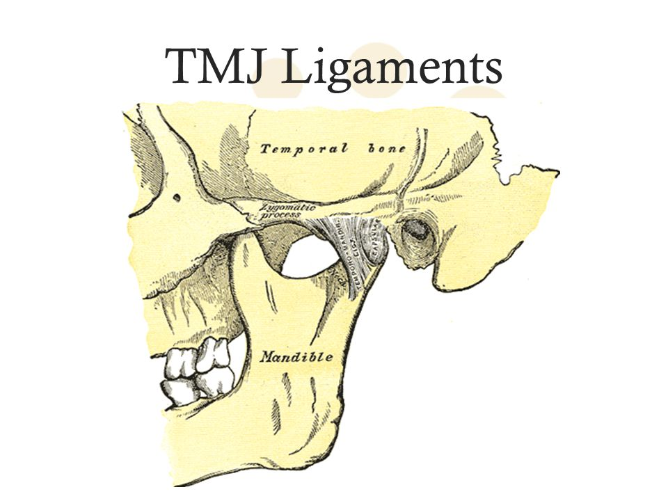 TMJ Ligaments