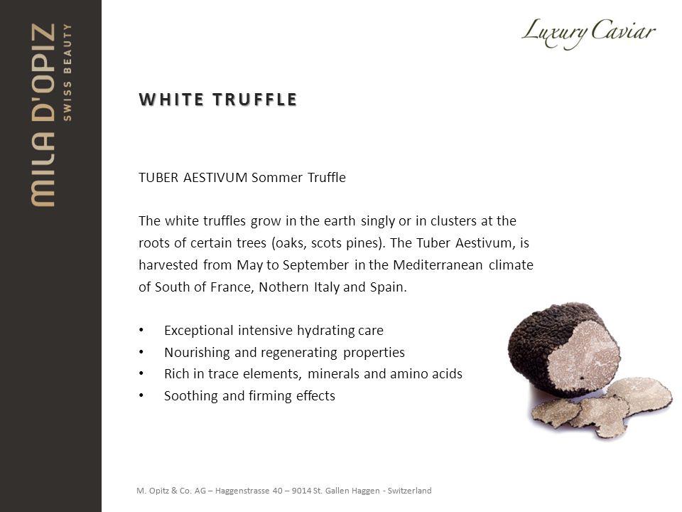 WHITE TRUFFLE TUBER AESTIVUM Sommer Truffle