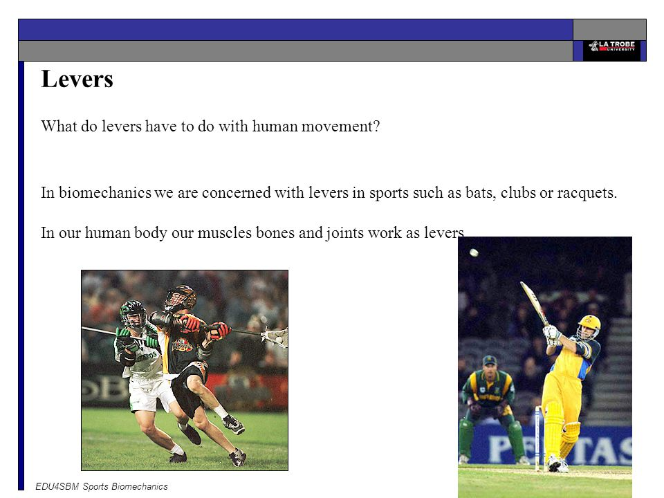 Levers What do levers have to do with human movement