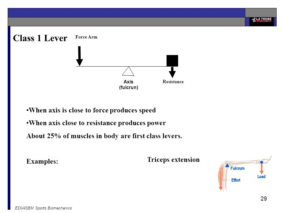 Class 1 Lever When axis is close to force produces speed