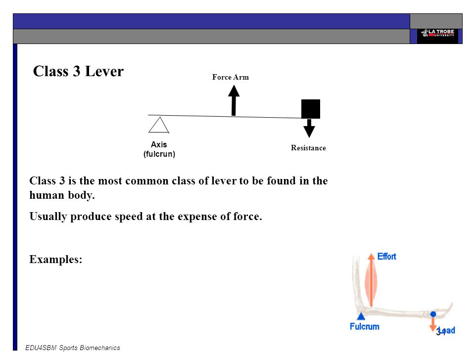 Class 3 Lever Force Arm. Axis (fulcrun) Resistance. Class 3 is the most common class of lever to be found in the human body.