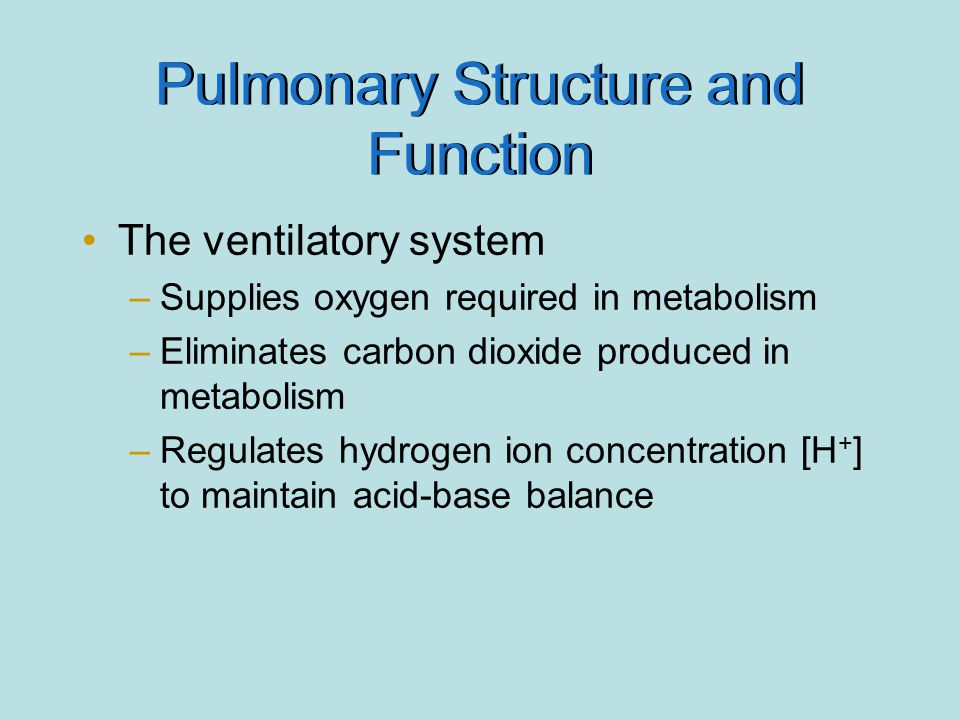 Pulmonary Structure and Function
