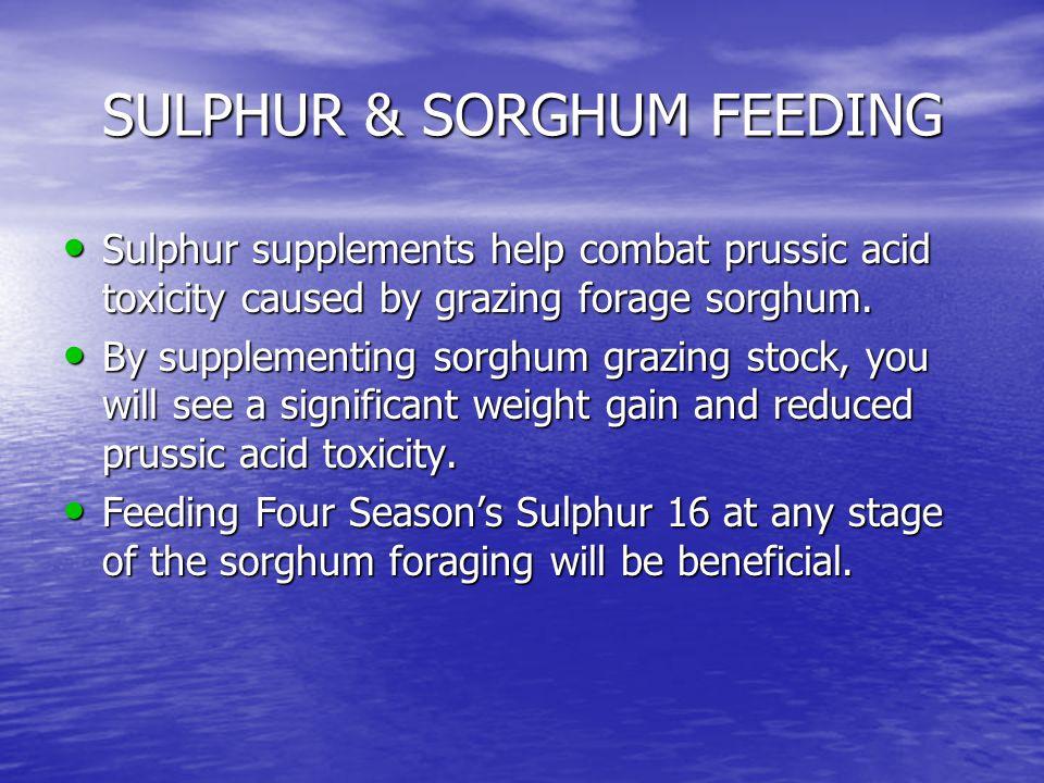 SULPHUR & SORGHUM FEEDING