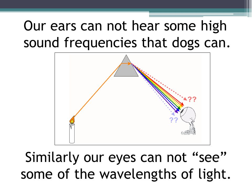 Our ears can not hear some high sound frequencies that dogs can.