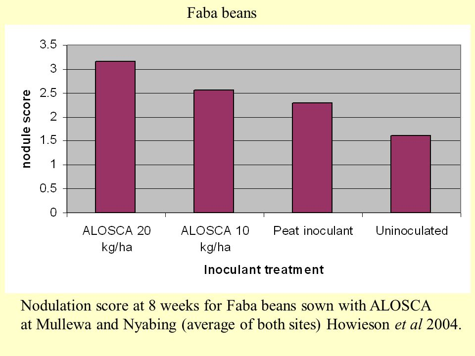Faba beans Nodulation score at 8 weeks for Faba beans sown with ALOSCA.