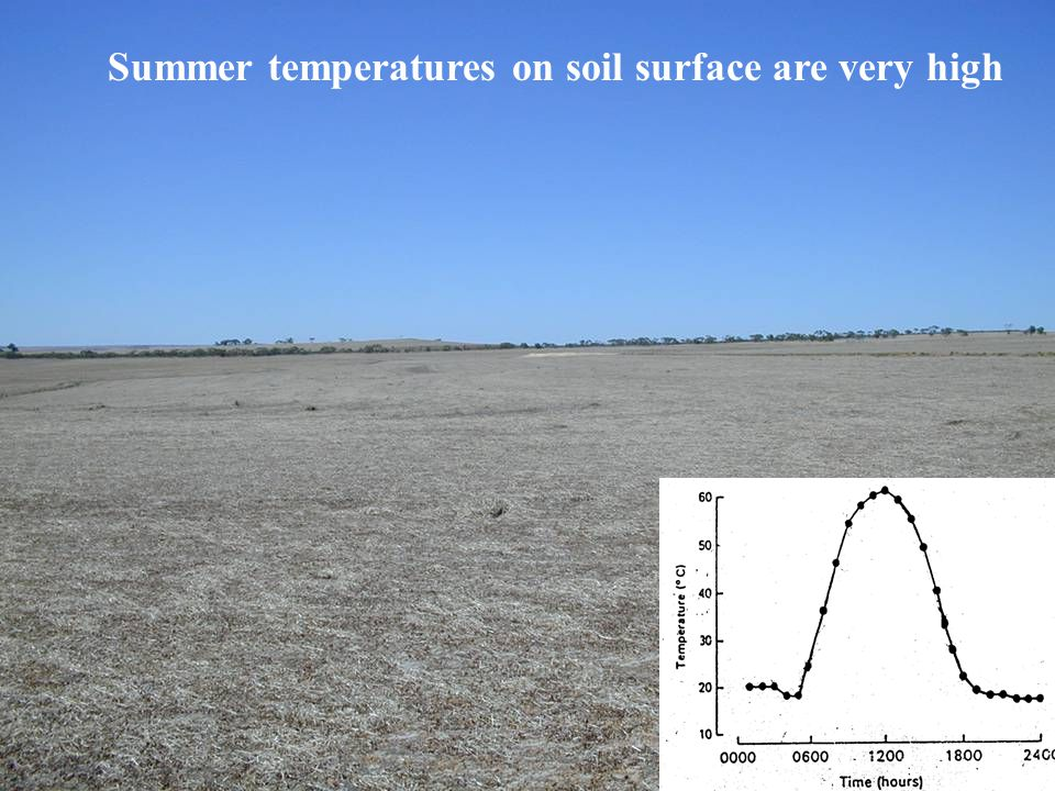 Summer temperatures on soil surface are very high
