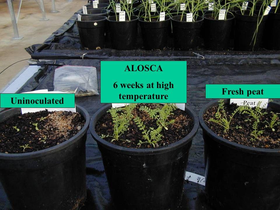 6 weeks at high temperature